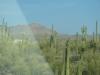 Auf dem Weg nach Phoenix. Jetzt weiss ich wieso Arizona einen Kaktus auf dem Nummernschild hat