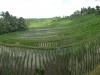 Ein großes Reisfeld (2/2)