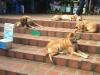 Überall Straßenhunde