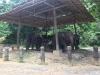 Am letzten Tag dann Elefantenreiten
