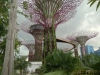 Gardens at the Bay, direkt vor dem Marina Bay Sands (2/2)