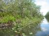 Endloses tropisches Moorland