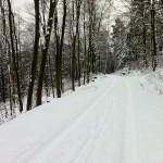 Verschneiter Pfälzer Wald